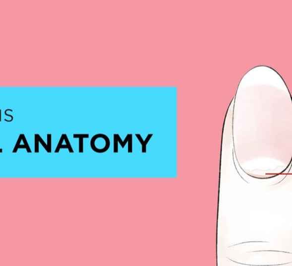 What is nail anatomy?